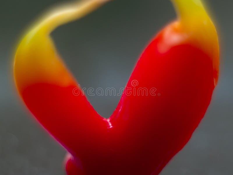 Två röda inter-fullvuxna peppar royaltyfri bild