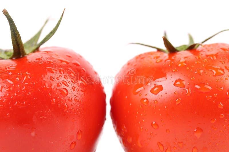 Två röda mogna tomater stänger sig upp. arkivbilder