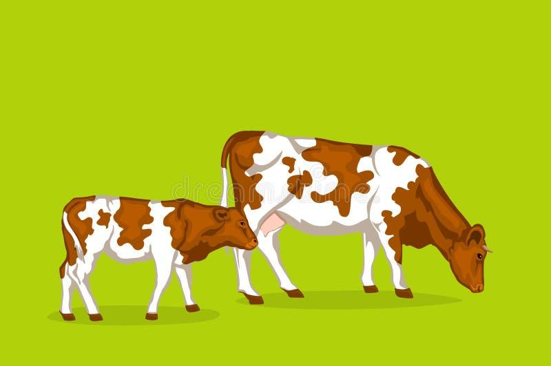 Två röda pied cattles stock illustrationer
