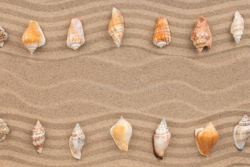 Två rader av snäckskal som ligger på sanden, med utrymme för text fotografering för bildbyråer