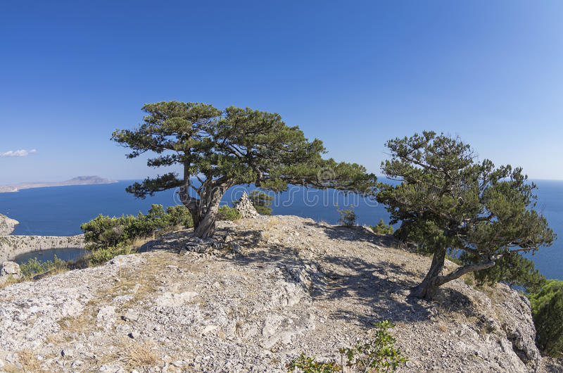 Två relictenträd på en bergöverkant crimea arkivbilder