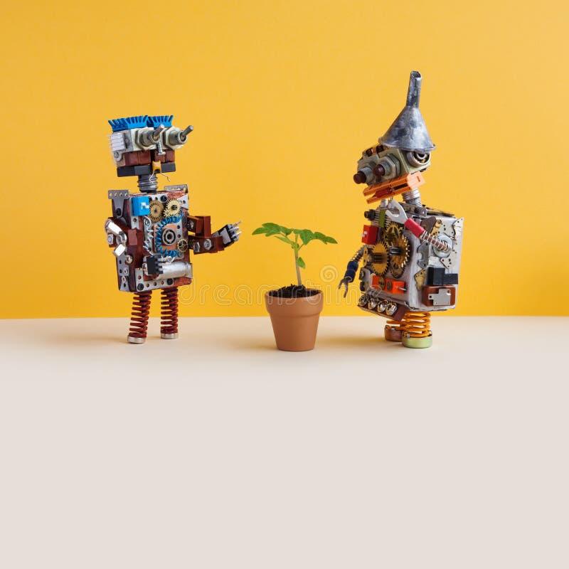 Två robotar undersöker en bosatt grön växt i en blommalerakruka Konstgjord organisk livväxt för intelligens kontra yellow royaltyfri foto