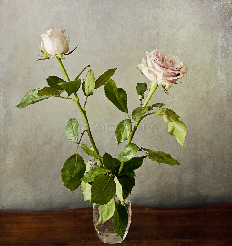 Två romantiska rosa rosor på grungetextur arkivfoto