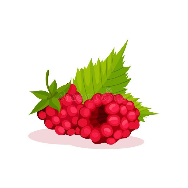 Två rosa hallon med gröna sidor sund mat Söta bär Dekorativ plan vektorbeståndsdel för yoghurt eller is stock illustrationer