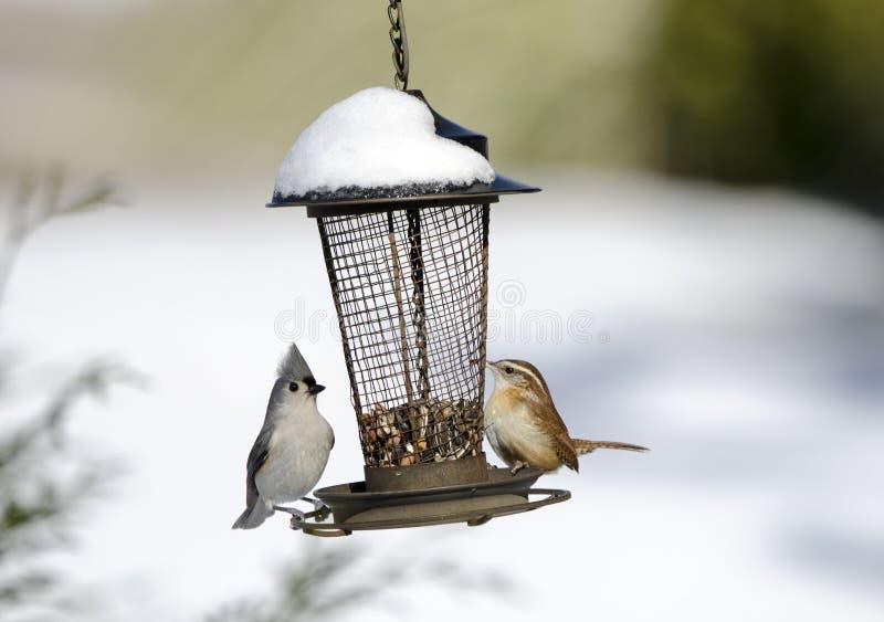Två sångfåglar på snö täckt fågel kärnar ur förlagemataren, Georgia, USA arkivbild