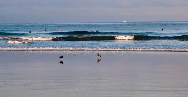 Två seagulls i bränningen med folk främjar ut i vattnet i Stilla havet arkivfoto