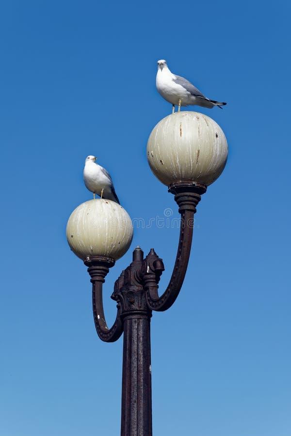 Två seagulls på lampor som täckas i fågelakter royaltyfri foto