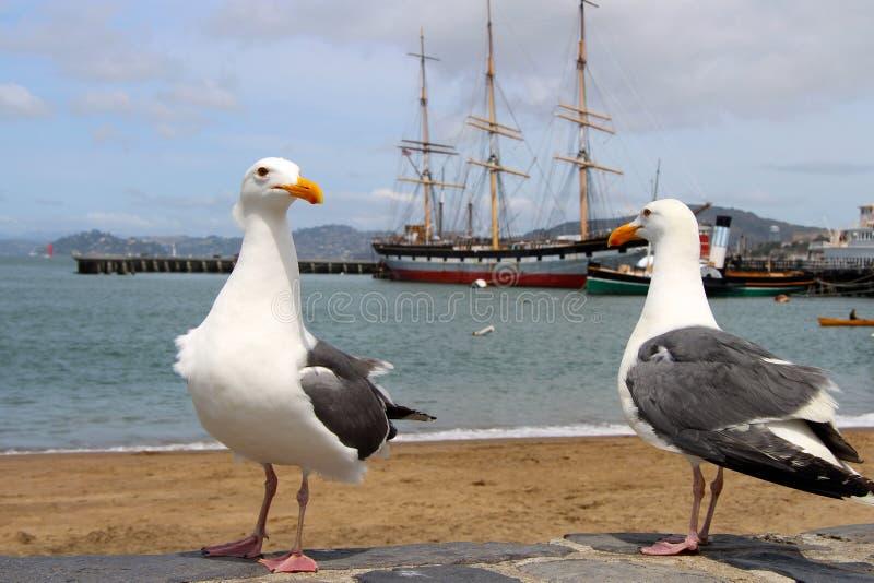 Två seagulls som står på kusten och en segelbåt arkivbilder