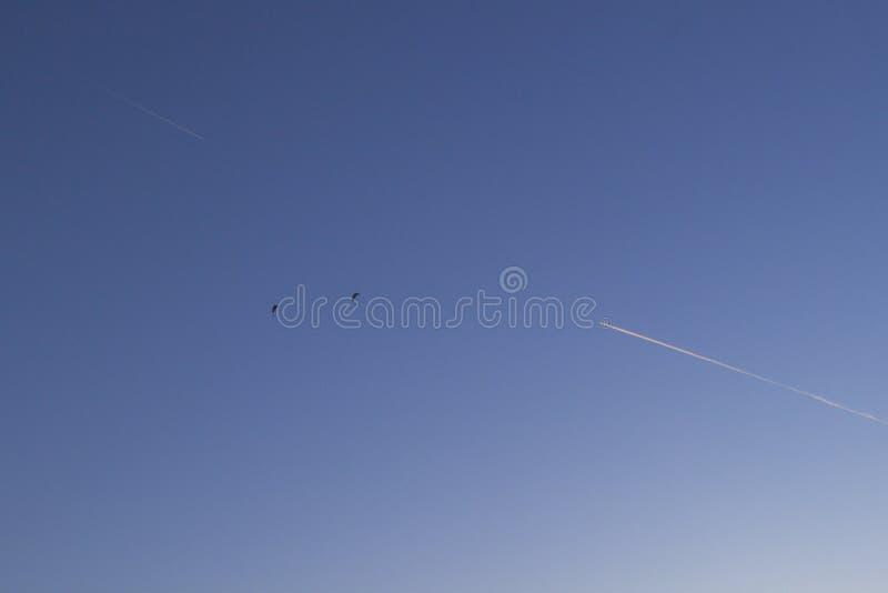 Två skydivers och två spår från nivån mot den blåa himlen royaltyfri foto