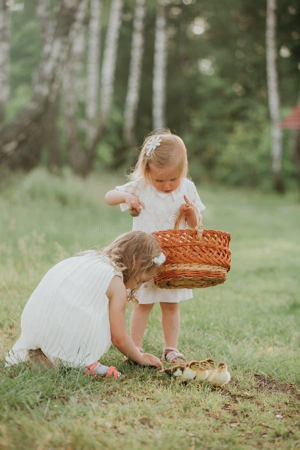 Två små flickor på solnedgången med älskvärda ankungar två små flickor som spelar med änder i, parkerar arkivbilder