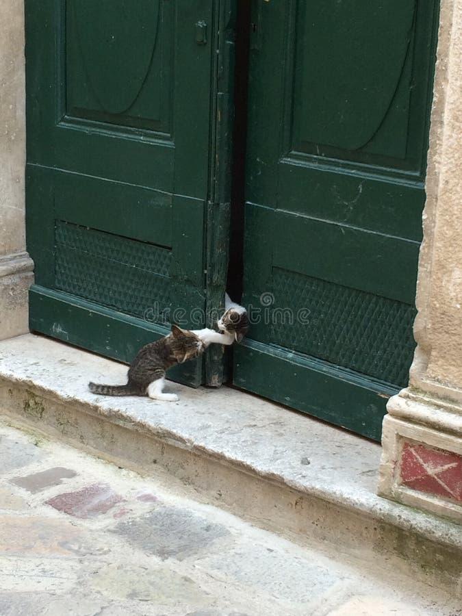 Två små kattungar spelar, en som hindrar den andra från att komma in i ytterdörren arkivbilder