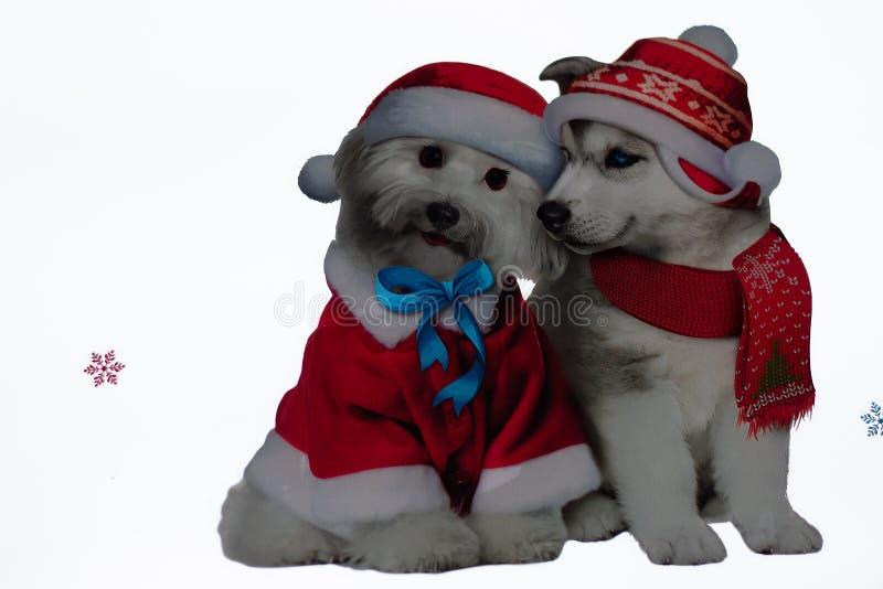 Två snövita mycket gulliga hundkapplöpning! stock illustrationer
