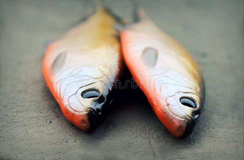 Två som är stora liv-som mjukt fiske, lockar royaltyfri fotografi