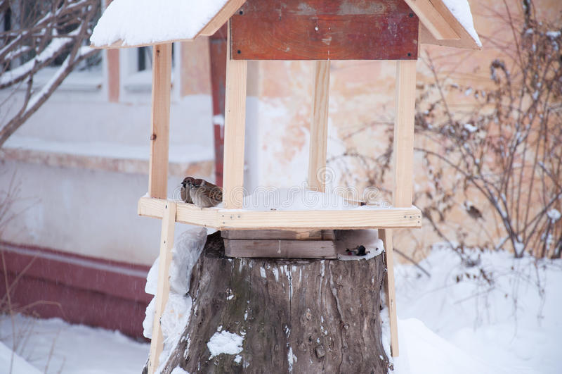 Två sparvar på fågelförlagemataretabellen royaltyfri fotografi