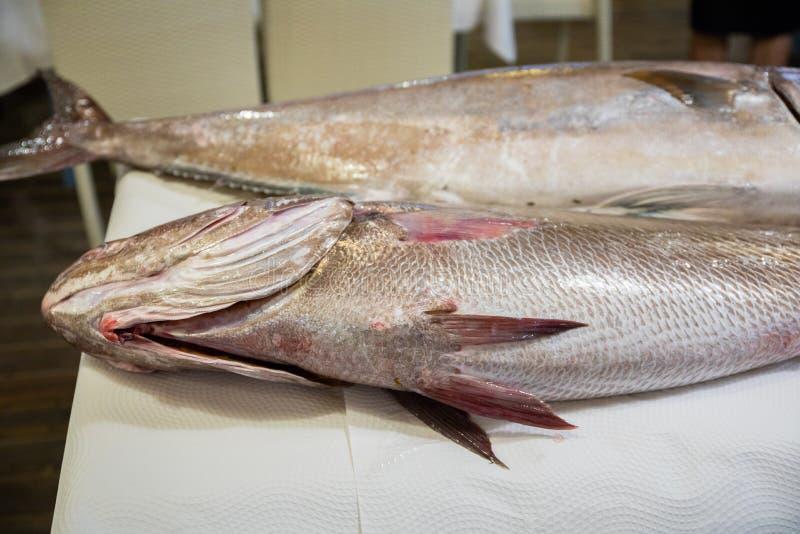 Två stor ny rå fisk Corvina och större Amberjack på tabellen royaltyfri fotografi