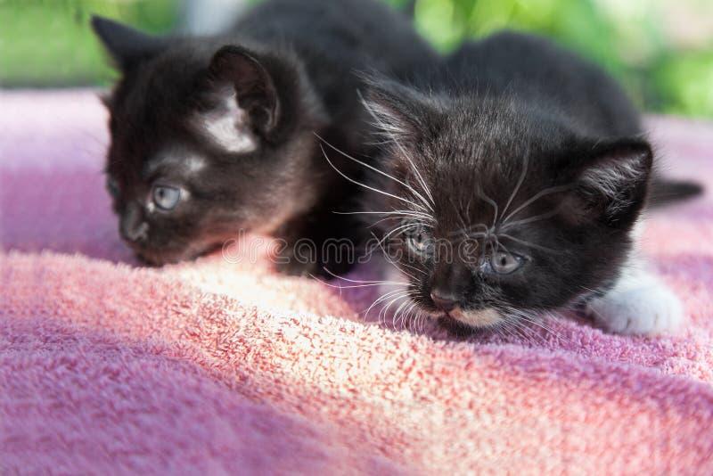 Två svarta kattungar arkivbild