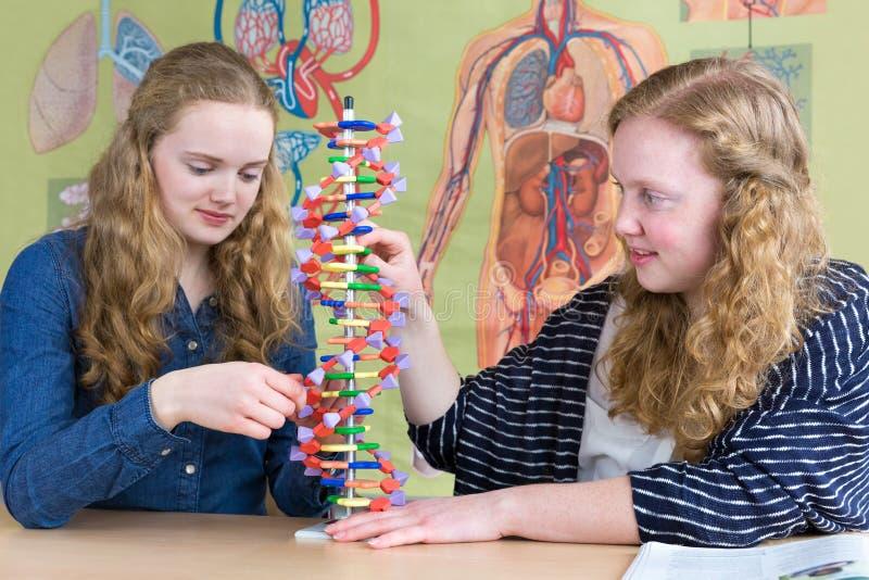 Två tonårs- flickor som studerar mänskligt DNA, modellerar i biologikurs royaltyfri fotografi