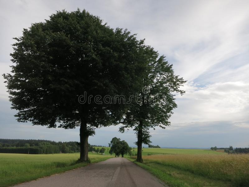 Två träd över den blåa himlen arkivbild