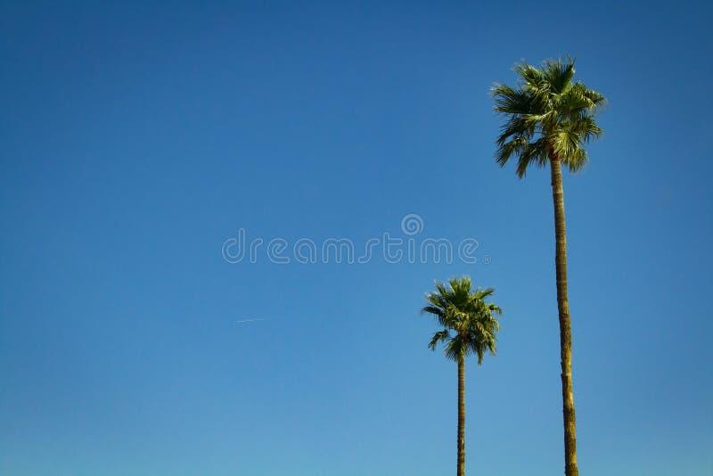 Två träd mot himlen royaltyfri foto