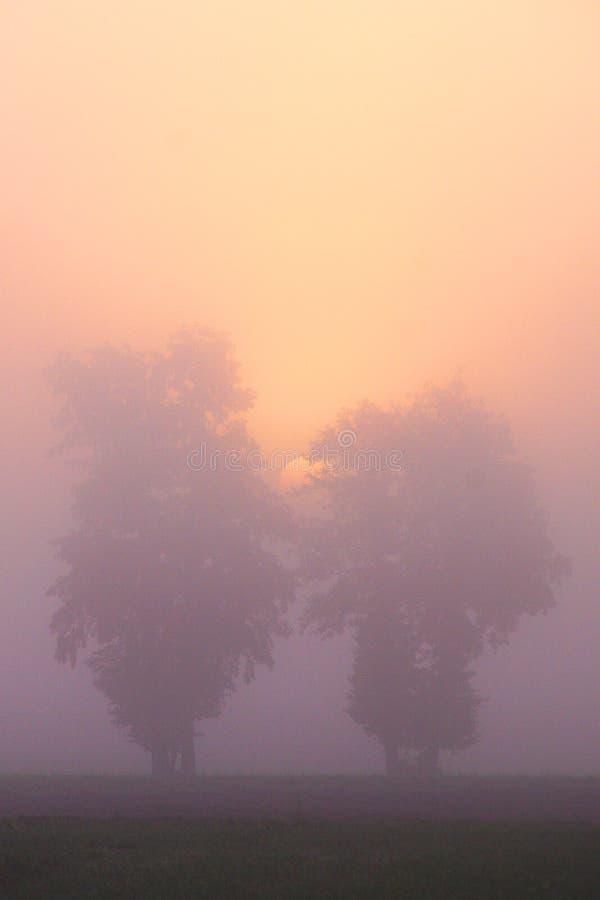 Två träd och Autumn Sunrise fotografering för bildbyråer