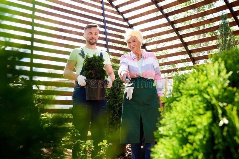 Två trädgårdsmästare i botaniskt växthus arkivfoton