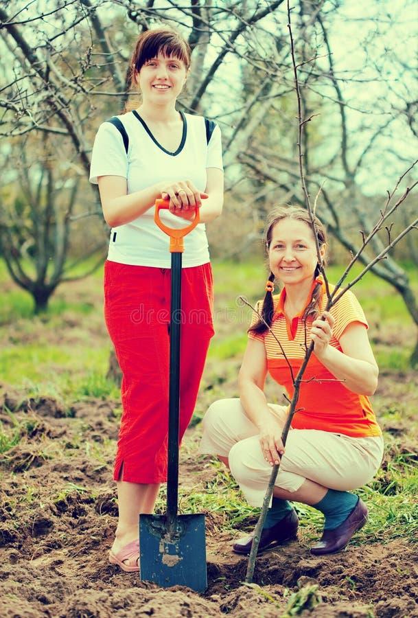Två trädgårdsmästare som planterar trädet royaltyfri fotografi