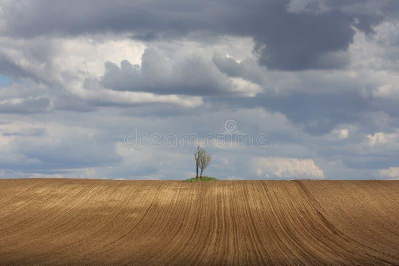 Två trees i fältet royaltyfria foton