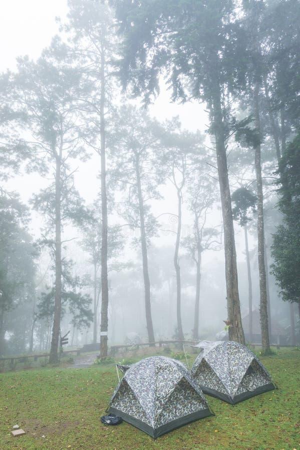 Två turnera tält i nationalpark royaltyfri foto