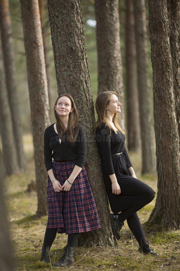 Två ung flickanära vänner går i en pinjeskog på en solig dag Gå arkivfoto