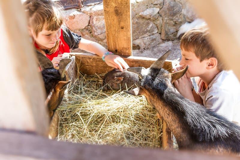 Två ungar - pojken och flickan - som tar på omsorg av tamdjur långt royaltyfri fotografi