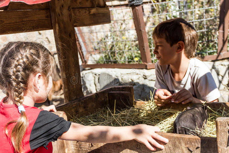 Två ungar - pojken och flickan - som tar på omsorg av tamdjur långt royaltyfria foton