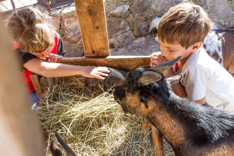 Två ungar - pojken och flickan - som tar på omsorg av tamdjur långt arkivfoto
