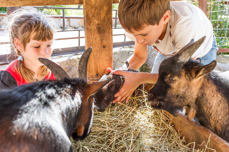 Två ungar - pojken och flickan - som tar på omsorg av tamdjur långt arkivfoton