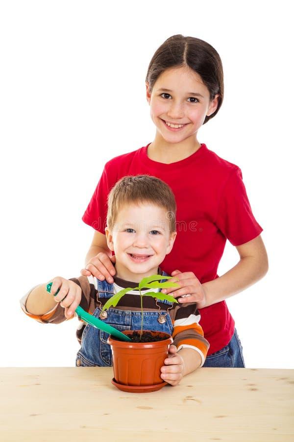 Två ungar som att bry sig för inlagd växt arkivbild