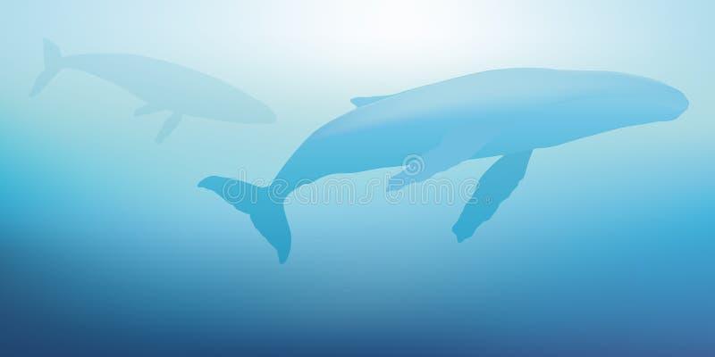 Två val simmar nästan yttersidan av havet vektor illustrationer