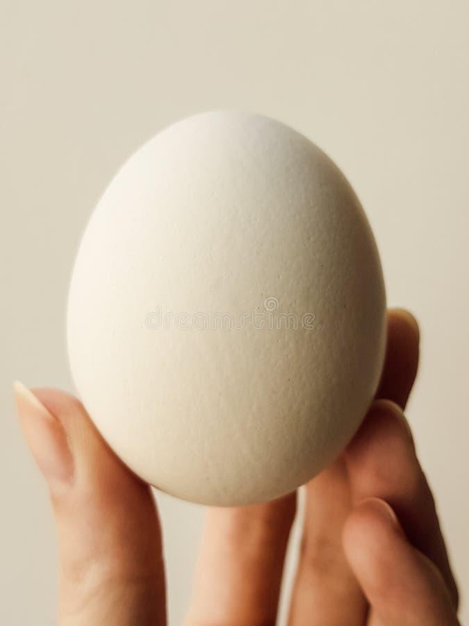 Två vita ägg på en orange platta arkivbild