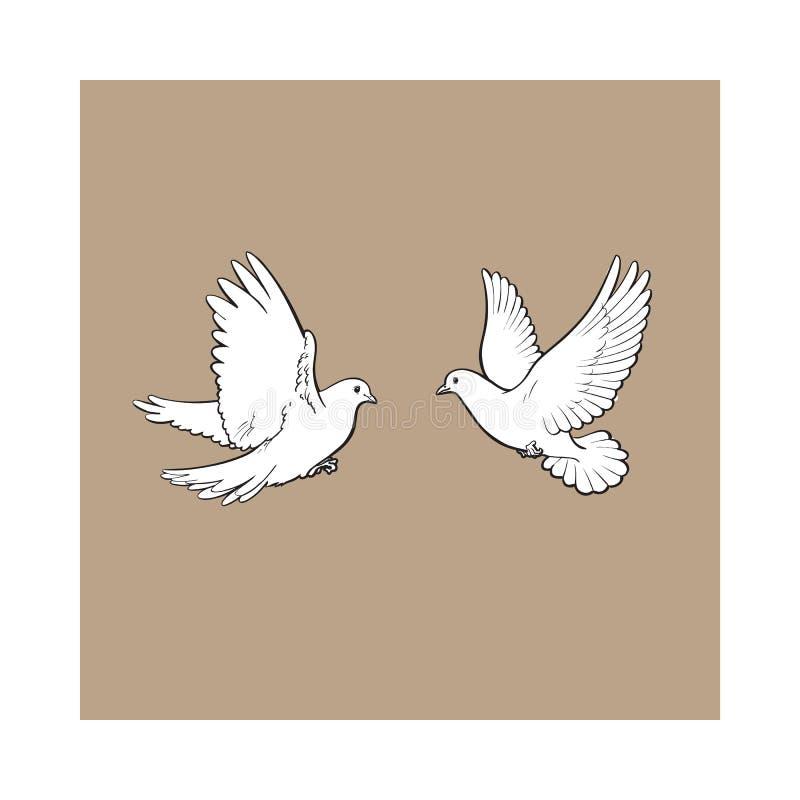 Två vita duvor för fritt flyg som isoleras skissar stilillustrationen vektor illustrationer