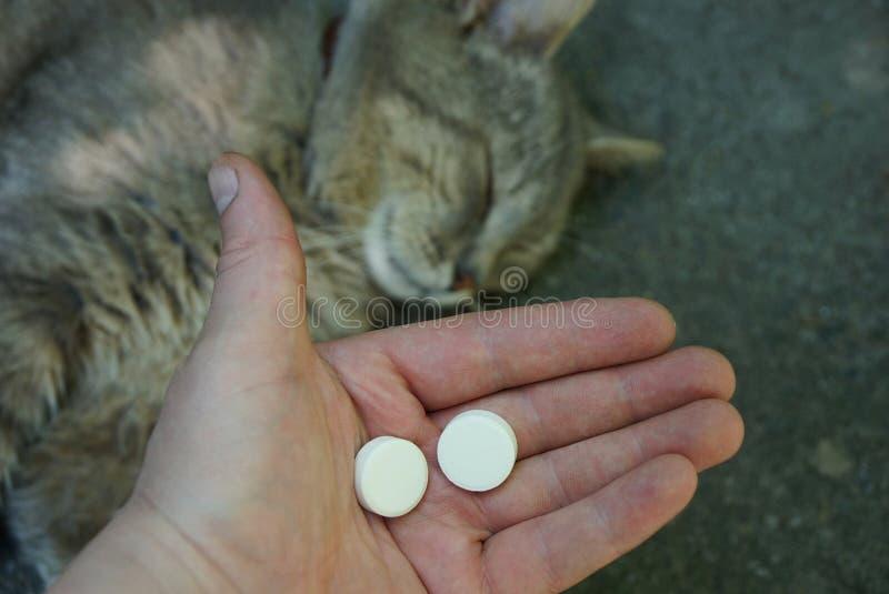 Två vita preventivpillerar i en hand och en grå katt royaltyfria bilder