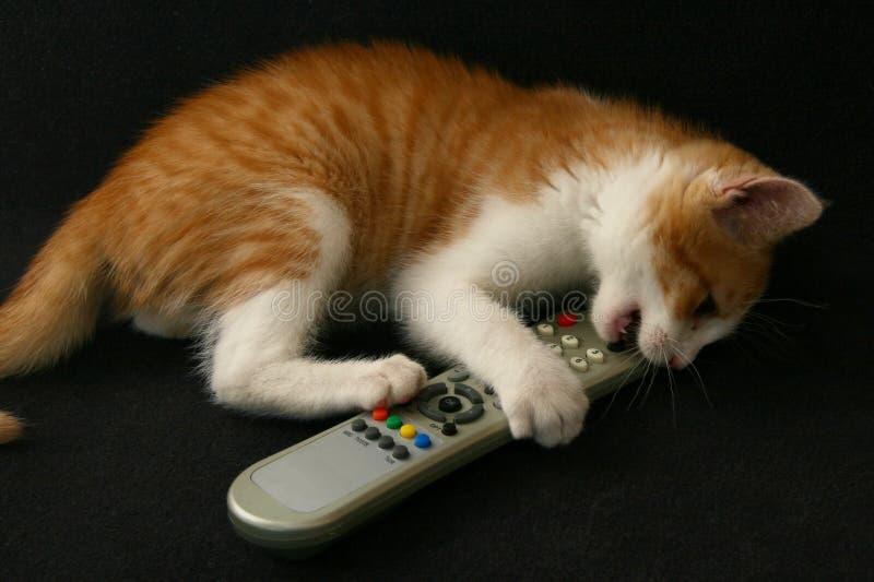 tv för kattkontrollremote royaltyfri bild
