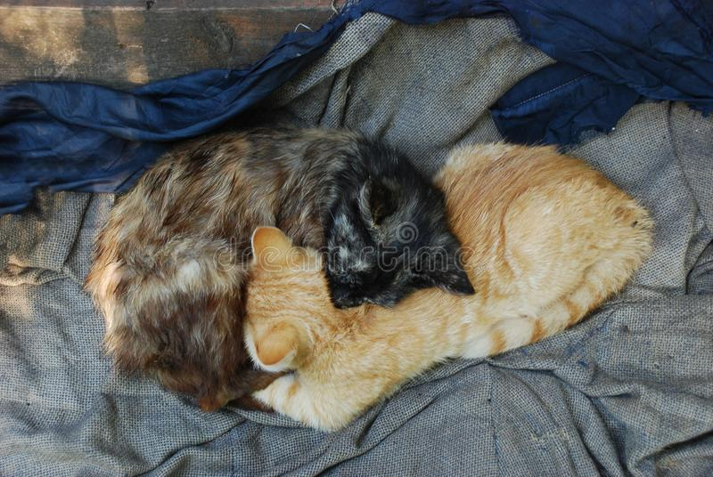 Tv? heml?sa kattungar som ?r ljust r?dbrun, och m?rk brun s?mn som det Ying yang tecknet royaltyfri fotografi