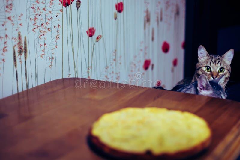 Tv? kattungar sitter framme av tabellen royaltyfria bilder