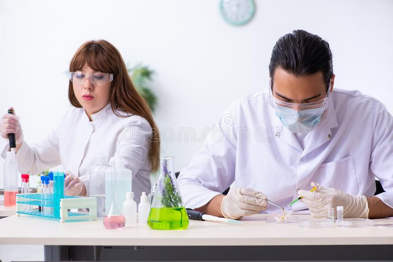 Tv? kemister som arbetar i labbet arkivbild