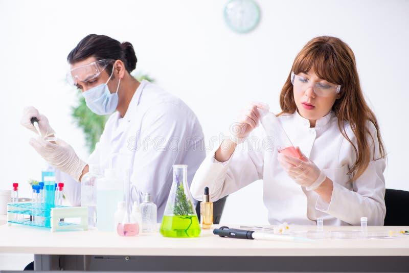 Tv? kemister som arbetar i labbet arkivfoto