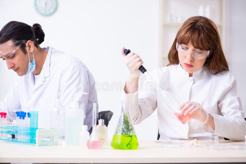 Tv? kemister som arbetar i labbet royaltyfri foto