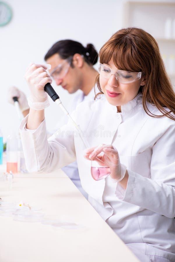 Tv? kemister som arbetar i labbet royaltyfri bild