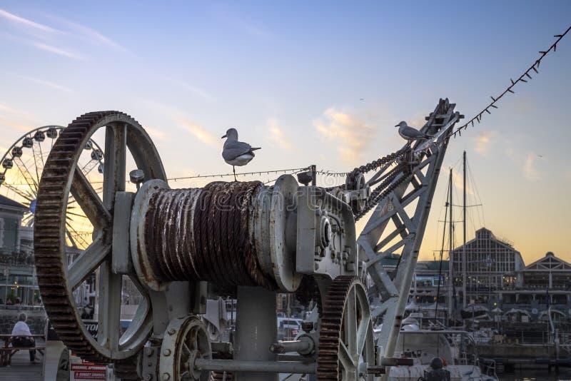 Tv? seagulls vid hamnen p? en kran p? solnedg?ngen arkivfoton