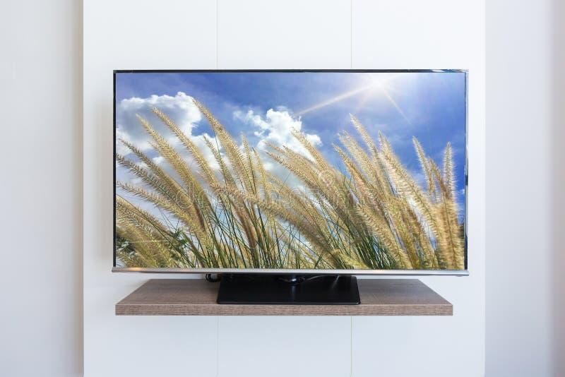 TV telewizja, trawa kwiat na parawanowym biel ściany tle dowcip zdjęcie stock