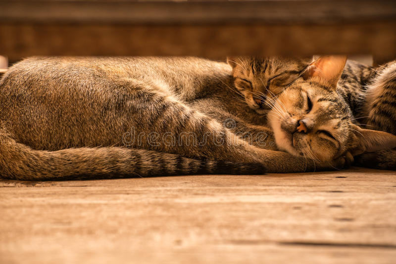 Tvilling- sova för cutieskatt royaltyfria foton