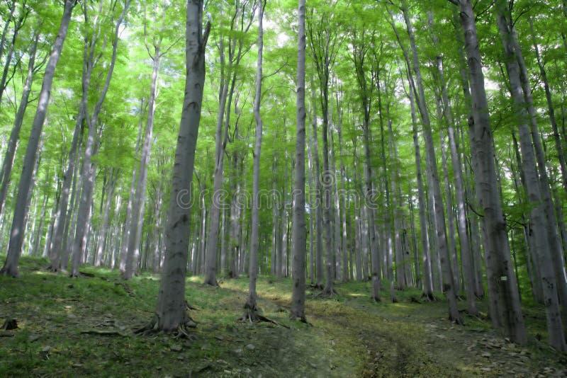 twarz drzewa zdjęcia royalty free