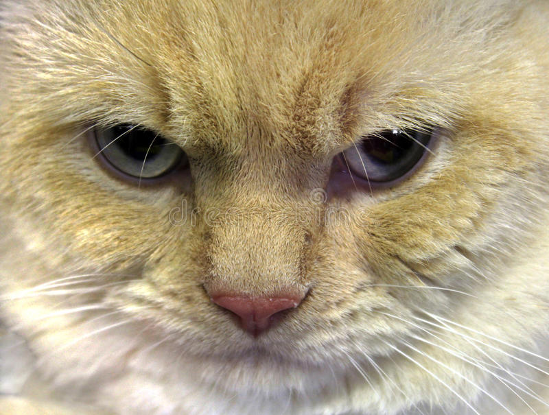 twarz kot twarz fotografia stock